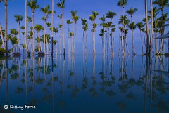 My retirement place...someday...hopefully... (RickyFeris) Tags: beach playa palmeras palmtrees reflexions republicadominicana reflejos saman colorphotoaward aplusphoto cosn