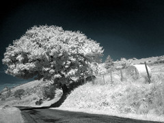 The winter of summer (Lolo_) Tags: road winter summer white tree field ir route infrared arbre blanc champ foin ardèche fontenelle infrarouge