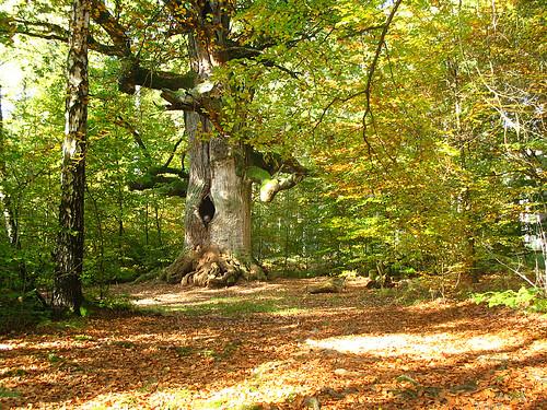 Old man in a tree by RainerSchuetz