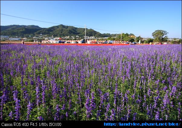 9711-新社花海:Date with Bee_009.jpg