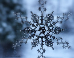 A chance of precipitation (lynne_b) Tags: snowflake winter light snow cold home window nature weather frozen illinois frost seasons decoration archives chilly snowfall precipitation