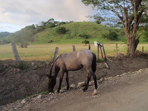 Little horses in CR