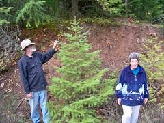 Found a tree