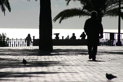 Contrallum mediterrània
