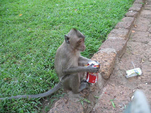 Monkey with empty can, considering options