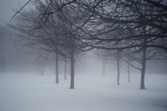 (Wendine) Tags: snow fog epson sonnar carlzeiss zm rd1s 50mmf15 winteryscene zeisscsonnar50mmf15