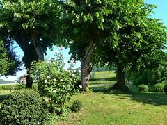 Villa Louise garden (lsbardel) Tags: france nature vineyard noir burgundy vine pinot