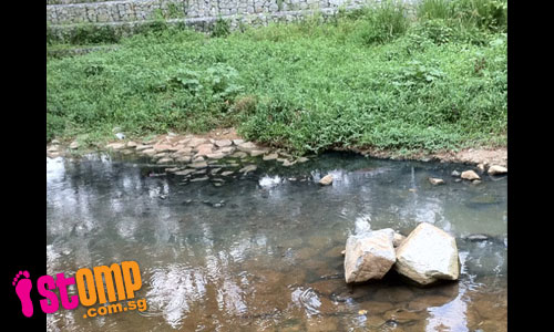 Bishan Park canal stinks: Is sewage being discharged into canal?