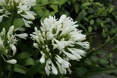 Flowers @ Doddabetta peak