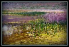 Pond (bonksie61) Tags: pond smörgåsbord digitalcameraclub supershot kartpostal avision isawyoufirst almostanything ysplix peachofashot