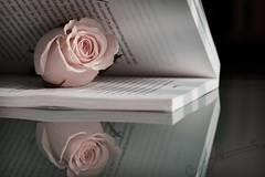 (A.A.A) Tags: pink white black macro reflection love rose canon photography book focus mark iii pale aaa amna irresistible eos1ds althani canoneos1dsmarkiii amnaaalthani hawaalrayyanfav abdualmajeedabduallah