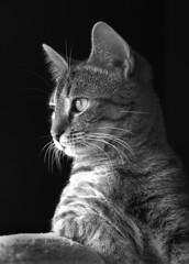 Jinx being nosy (FilmQueen) Tags: cat jinx