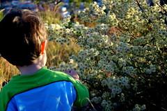meu guri... (Fabiana Velso) Tags: flores verde azul flor menino mo pequeno espinho arbusto fabianavelso