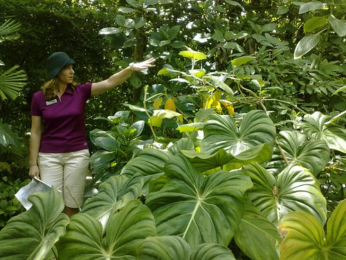 lulu plant