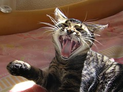 A funny day... (Kitty & Kal-El) Tags: pet smile animal cat feline gato felino kalel