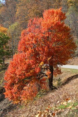 Vivid Tree