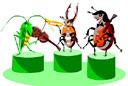 insects (3doel82) Tags: fish bird animals insect gambar koleksi ikan belajar burung binatang carnivora serangga mamalia amphibi