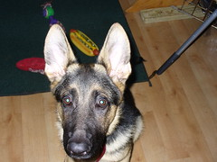 Mr. Big Ears