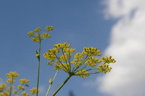 又是路邊的小花, 用不同的角度拍拍