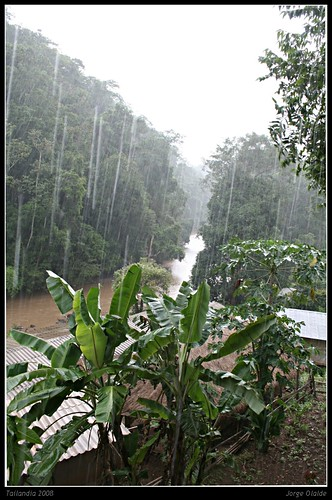 El monzón desde la selva tailandesa  / Monsoon rain from thaylandese jungle