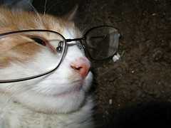 My Cat Wears Glasses