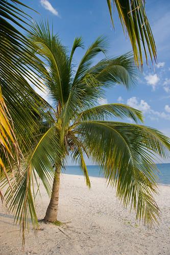 Palms on a white sand beach, Playa Acone