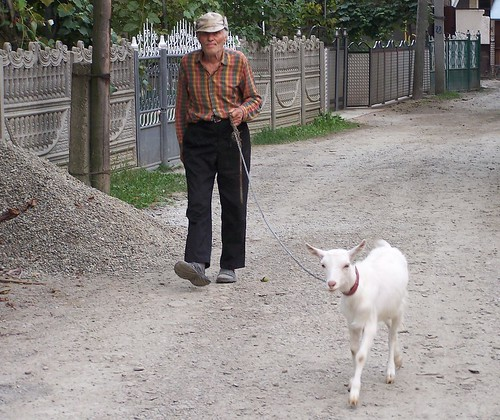 A man walking his goat home