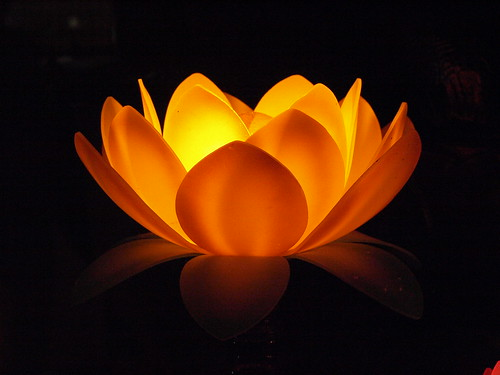 Lotus by Anna Majkowska, on Flickr