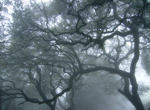 Arboreous in Clouds