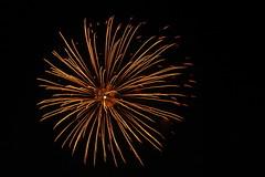 Golden Star with Pink tips (EpicFireworks) Tags: light fireworks firework bonfire burst pyro 13g epic pyrotechnics sib