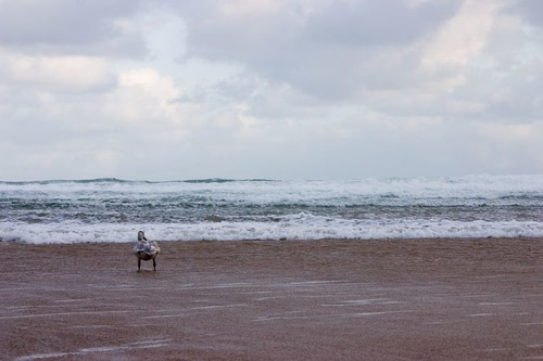 Goose on the beach (1)