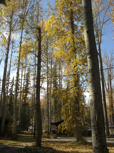 Die Bäume im Wolf Resort.