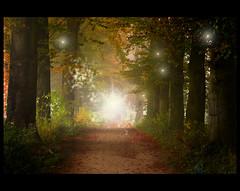 Mist of Malantir (♥ Damona-Art •.¸¸.•´¯`•.♥.•´¯`) Tags: autumn trees light mist fall colors leaves souls fairytale forest elfs lights frames woods nikon raw shadows belgium herbst fairy fantasy paths mystic d300 roq infinestyle thesecretlifeoftrees malantir