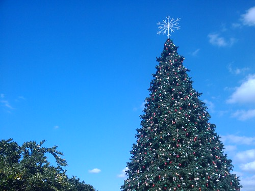 Christmas tree in the park