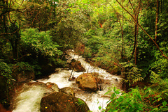Flowing by (Aditi Patnaik) Tags: green stream wayanad kerela vythiriresorts