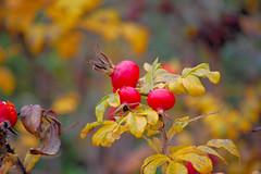 Sensory garden,Stoke park,Guildford (ashley.gill15) Tags: uk england nikon surrey guildford fabulous smrgsbord d40 nikond40 aplusphoto eliteimages bokehmacrofriends