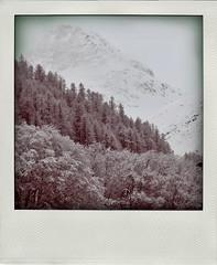 Get it while you can ! (martoulette) Tags: trees mountain snow alps arboles hiver nieve neige froid fort lafrance valdisre charvet martoulette poladroids prenostalgie poladroidcestlevraifauxpolaroid unepetitecouchedeblanc