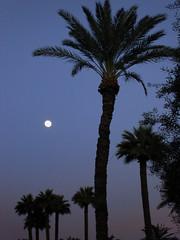 Wigwam resort moon at dusk (Serge Melki) Tags: trees arizona moon green phoenix geotagged this day sony sunny az palm resort keep serge wigwam melki phx litchfield s600 moonrising wigwamresort litchfieldpark dscs600 wigwamgolfresort moonatdusk wigwamresortspa geo:lat=33494715 geo:lon=112357795 golfinginphoenix palmtreeresort toomuchwaterwasted wigwamresortarizona