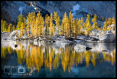 Golden Light II (Adrian Klein) Tags: blue autumn light cold reflection fall yellow canon gold golden washington klein hiking clear crisp alpine backpacking needle adrian wilderness larch refreshing enchantment