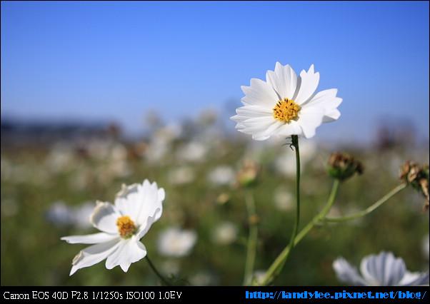 9711-新社花海:Date with Bee_065.jpg
