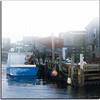 Rock Lobster (Dave the Haligonian) Tags: ocean sea bay boat fishing fisherman novascotia cove atlantic lobster peggyscove rocklobster capeislander dsc0606