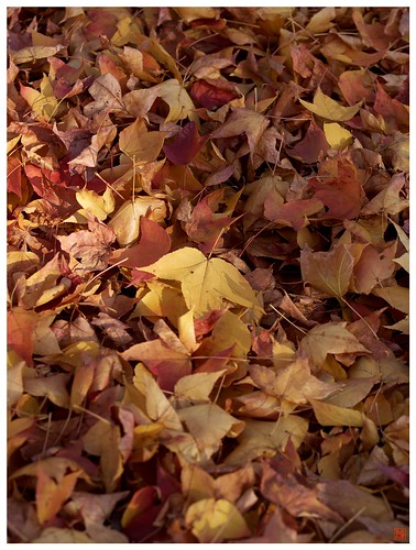 Carpet of the autumn leaves