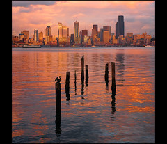 The same place, within an hour series....4:50pm (mcazadi) Tags: seattle sunset water birds clouds buildings lights washington filters colorcombo blueribbonwinner pillings polorizer cormerants singhray theunforgettablepictures theunforgettablepicture rubyphotographer alemdagqualityonlyclub 3stopndgrads