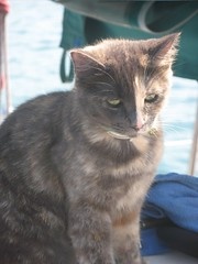 I'm a Serious Boat Cat