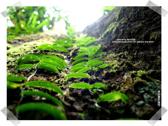 keindahan-flora-di-Batu-Maloi-2
