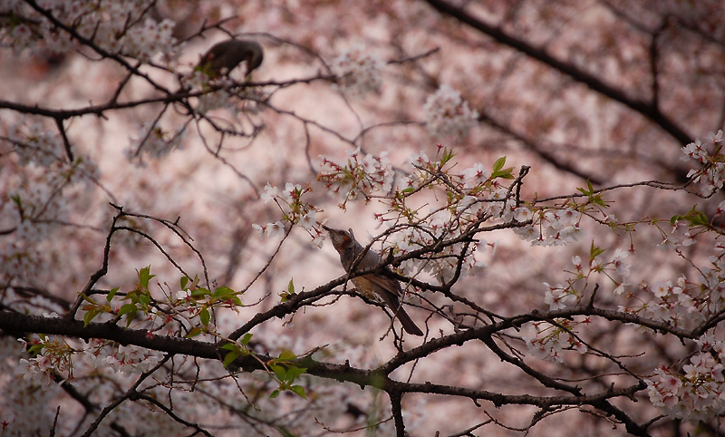 _birds-2_