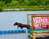 Dock Dog Diving at Lilypons (gotbob) Tags: lake dogs water canon pond dive retriever labs dockdiving slidr