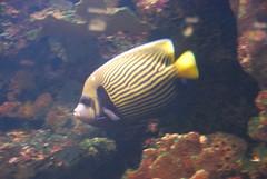 DSC_0431 (bobosh_t) Tags: fish washingtondc nationalaquarium aquaticlife