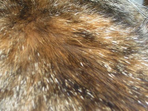Kitten fur 2