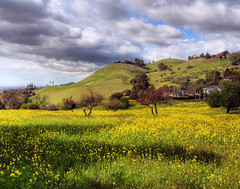 Spring Blossom (flopper) Tags: flowers sky house yellow clouds spring blossom hills flopper excellentscenic